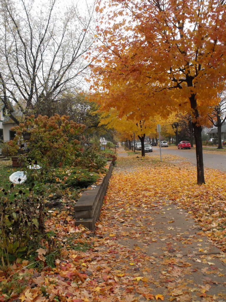 Beautiful Cleveland walk ways before fall cleanup